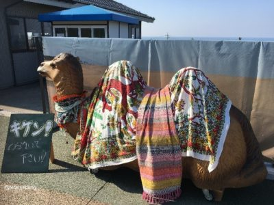 a camel object (photo spot)